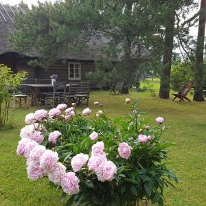 Hotel Pictures: Männi Summerhouse, Kassari
