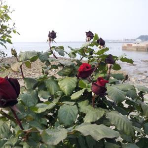 Fotografie hotelů: Yongdu Beach Pension, Boryeong