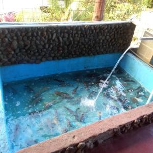 Hotellbilder: Cabañas Rio Celeste, El Achiote