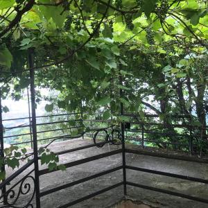 Φωτογραφίες: Guest House Nature, Salibauri