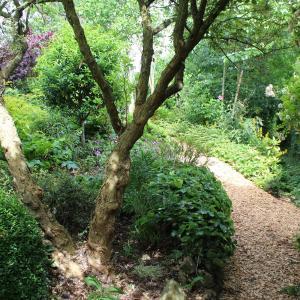 Hotel Pictures: Au Jardin Des Violettes, Mahéru