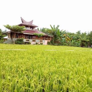 Hotelfoto's: Rumah Papa Homestay, Bukit Lawang
