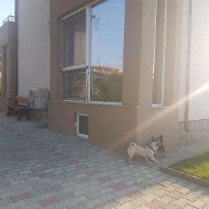 ホテル写真: For Friends Guest House, Chernomorets