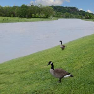 Fotos del hotel: Riverview Inn, Sevierville