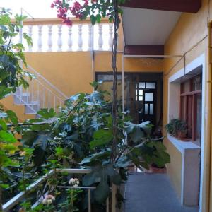 Hotel Pictures: Homestay Jorge Sucre, Sucre