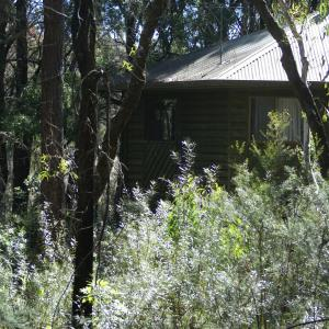 Hotelbilder: Twin Falls Bush Cottages, Fitzroy Falls