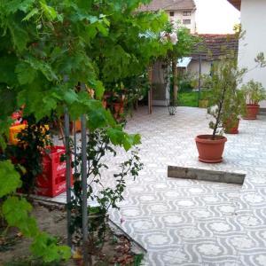 Fotos do Hotel: Guest House Dar, Polski Trŭmbesh