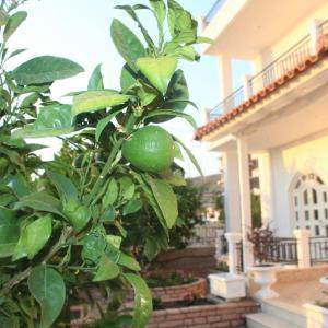 Hotelbilleder: Villa Sildi, Gjashtë