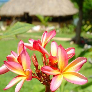 Hotel Pictures: Beach Cocomo, Sigatoka