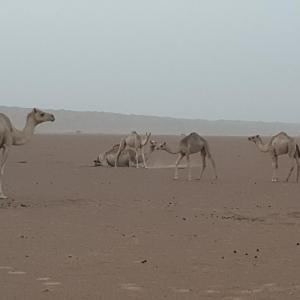 Hotel Pictures: Rimal Biddyh Desert Camp, Al Ghabbī
