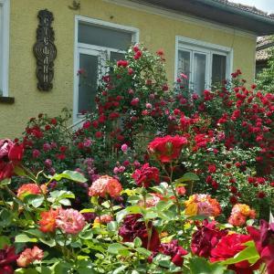 Hotellbilder: Guest House Stefani-Elena, Elena