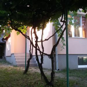 Fotografie hotelů: ЛОЗИЦА, Zlatitsa