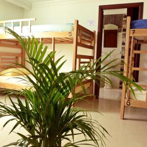 Hotel Pictures: PuraGuajira Hostel, Ríohacha