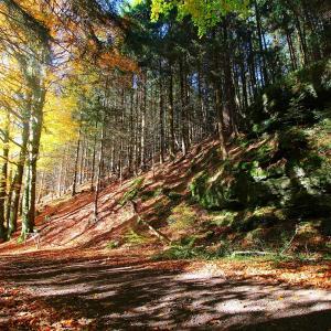 Hotelbilleder: Thüringer Waldbaude, Tambach-Dietharz