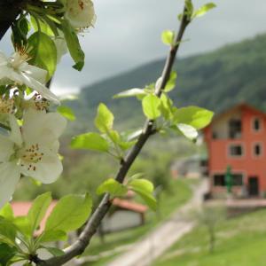 Hotellbilder: Hotel Garvanec, Druzhevo