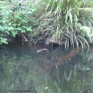 Zdjęcia hotelu: Platypus Ponds Bed & Breakfast, Tarbucks