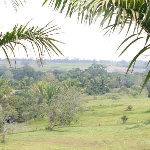 Φωτογραφίες: Coconut Ridge, Listowel