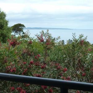 Φωτογραφίες: The View House, Lorne
