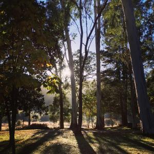 Hotelfoto's: Bright Cabin Park, Bright