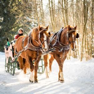 Hotelbilleder: Hotel-Gasthof Pferdekoppel, Seewald