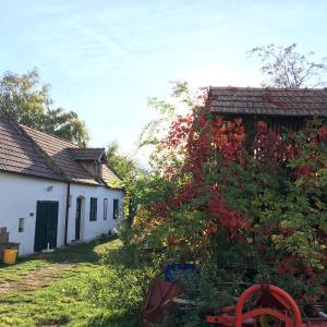 Hotellikuvia: Am Ziegenhof, Parndorf