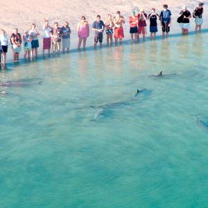 酒店图片: RAC Monkey Mia Dolphin Resort, 蒙克米亚