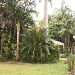 Fotografie hotelů: Mudjimba Beach Tropical Cottage, Mudjimba
