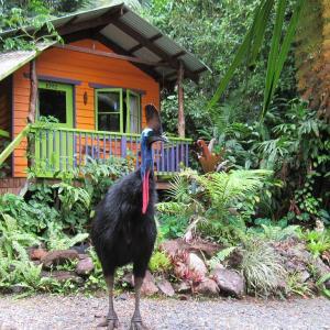 Foto Hotel: Rainforest Hideaway, Cape Tribulation