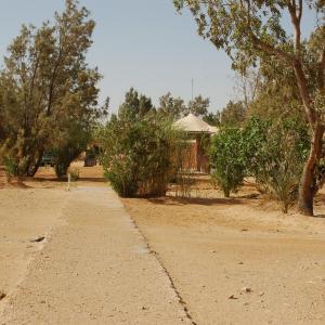 Fotos do Hotel: Campement Ain Essebat, Douz