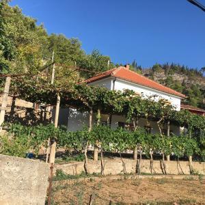Hotel Pictures: Kat porodicne kuce, Čapljina