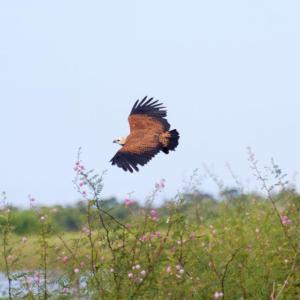 Φωτογραφίες: See Belize Birdwatchers Vacation Rental Getaway, Crooked Tree