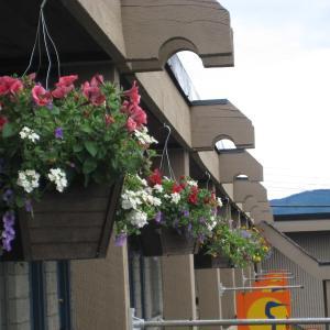 Hotel Pictures: Thunderbird Motor Inn, Duncan