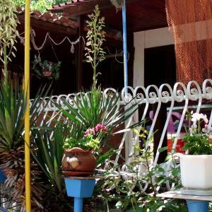 ホテル写真: Smile Bungalow, Chernomorets