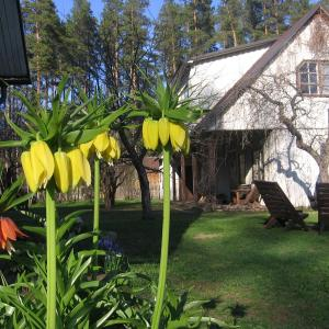 Hotel Pictures: Männi Farm Holiday House, Eoste