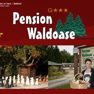 Hotelbilleder: Pension Waldoase Hirschbuchenkopf, Güntersberge