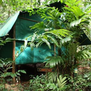 Hotelbilleder: Daintree Crocodylus Village, Cow Bay