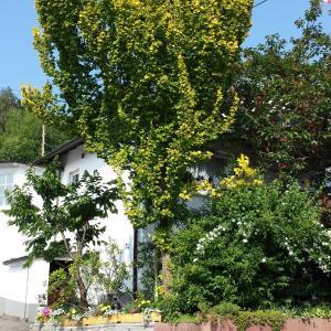 Hotelbilleder: Ferienwohnung Bilstein, Lennestadt