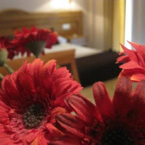 Hotel Pictures: Hostal Arba, Alcobendas