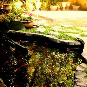 Φωτογραφίες: Central Hotel, Junín