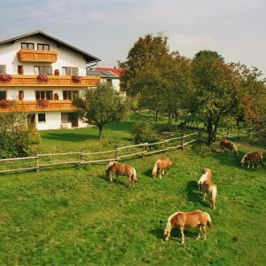 Zdjęcia hotelu: Wolf-Hof, Pressbaum