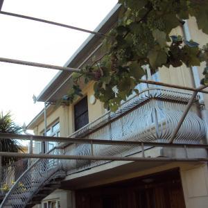 Hotellikuvia: Guest House at Bagrationi Street, Zugdidi