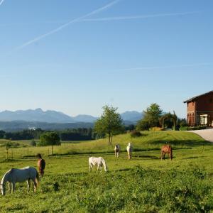 Hotelbilleder: Aschbacher Hof, Feldkirchen-Westerham