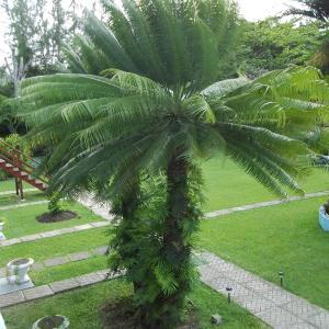 Hotellbilder: Palm Garden Hotel Barbados, Bridgetown