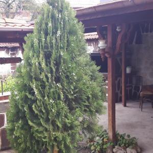 Hotellikuvia: Guest House Zlatinchevi, Dobrinishte
