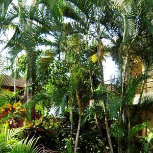 Fotos del hotel: Sueños del Paraiso, Jacó