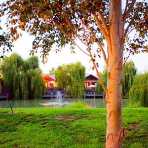 Φωτογραφίες: Perricoota Vines Retreat, Moama