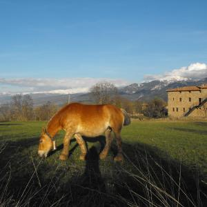 Hotel Pictures: Cal Trisca, Bellver de Cerdanya