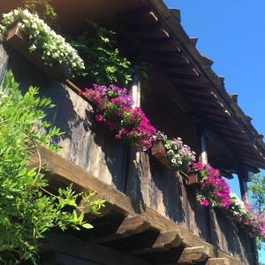 Hotel Pictures: Stefanina Guesthouse, Bozhentsi