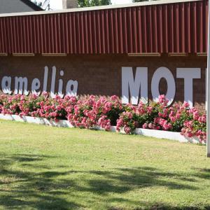 Hotellikuvia: Camellia Motel, Narrandera
