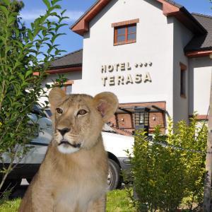 Hotel Pictures: Hotel Terasa, Frýdek-Místek